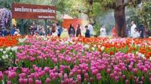 เทศกาลดอกไม้เมืองหนาวเชียงราย ! นักท่องเที่ยวแห่ชมทะลุหลักล้าน