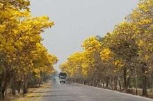 ถนนสายดอกไม้ @ สุพรรณบุรี