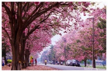 เมืองไทยสวยงามไม่แพ้ชาติใดในโลก