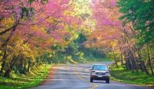 ไม่ต้องไปไกลถึงญี่ปุ่น เพราะเมืองไทยก็มีซากุระให้ชมแล้วนะ สวยไม่แพ้กัน สวยแค่ไหนไปดุ~