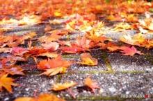 ใบไม้เปลี่ยนสีปี 2018 ที่ญี่ปุ่นและจุดชมใบไม้เปลี่ยนสีสวยๆ ทั่วประเทศ