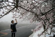 ละมุนละไม...หิมะ เมษาโปรยปรายยามฤดูใบไม้ผลิของกรุงปักกิ่ง