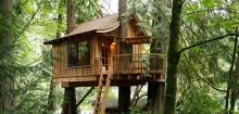 ชวนเที่ยว! บ้านต้นไม้ในฝัน Tree House Point ที่เมืองวอชิงตัน