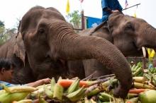เดือนมีนาคมนี้ เชิญเที่ยวงานวันช้างไทย 13 มี.ค.
